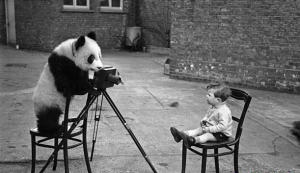 foto panda nen
