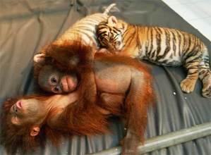 historia_amor_animal1