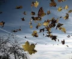 viento hojas