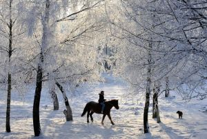 Beauty-of-Winter-08