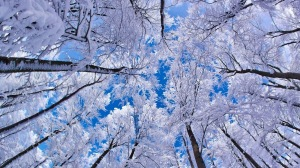 winter-sky-freedesktopwallpapersite-com