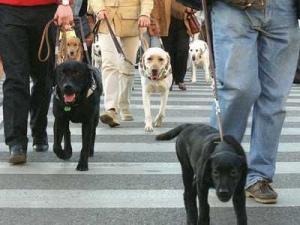 perros-guia-de-locos-y-enajenados-5